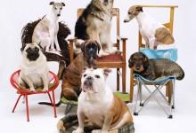 Dogs - Maarten Wetsema