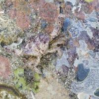 Crab, 100x130 cm, 2007
