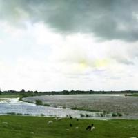 De IJssel bij Veecaten 1, 51x132 cm, 2011