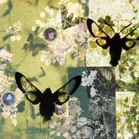 butterflies 10, 119x159 cm,2011