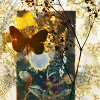 butterflies 12, 119x159 cm,2011