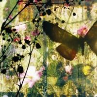 butterflies16, 65x145,5 cm, 2011