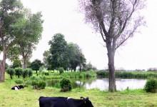 Veecaten & Dronthen - Jan Koster