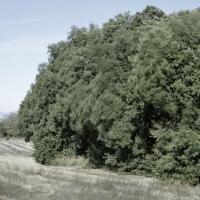 Déposition, 45x54 cm, 2010