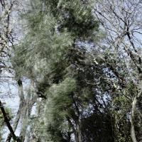 Déposition, 54x45 cm,2010