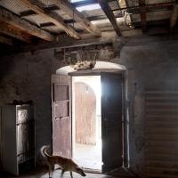 Hond El Pairet, 2013