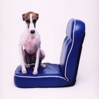 Daan on blue chair, 70x70 cm, 2008