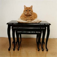 Lucas, 70x70 cm, 1997