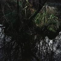 Zuijderwijk/Vergouwe, Wet and Wild,, 2013