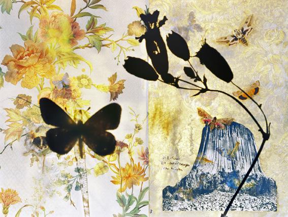 butterflies 3, 119x159 cm  and 75x100 cm,2011