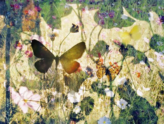 butterflies 5, 119x159 cmand 75x100 cm ,2011