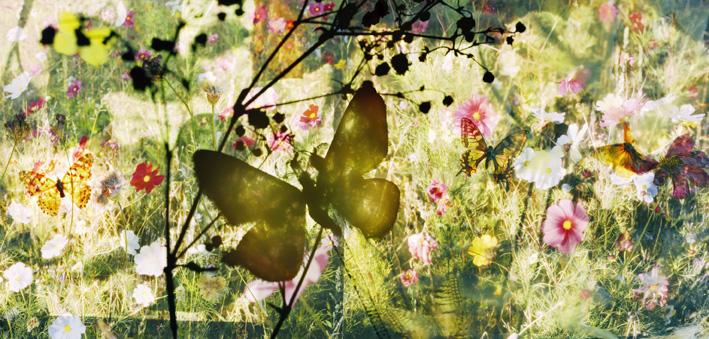 butterflies 6, 68x142 cm,2011