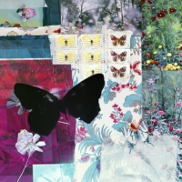 butterflies 7, 119x119 cm and 70x70 cm, 2011