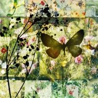 butterflies 15, 119x119 cm and 70x70 cm, 2011