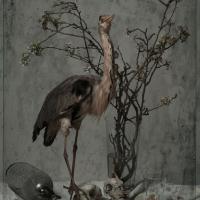 Heron, 102x72 cm, 2016