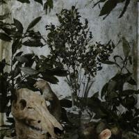 La figue et le sanglier, 102x72 cm, 2016